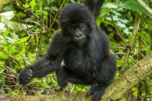 10 Day Uganda Gorilla