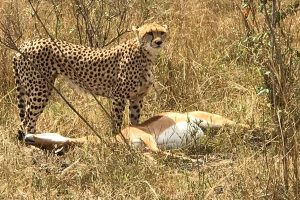 12 Day Complete Safari to kenya