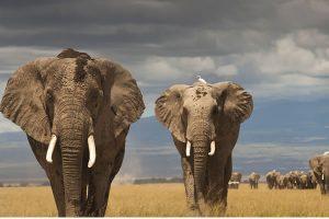17 Day Uganda Wildlife