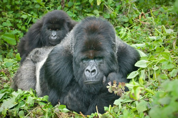 6 Day Rwanda Gorilla Safari