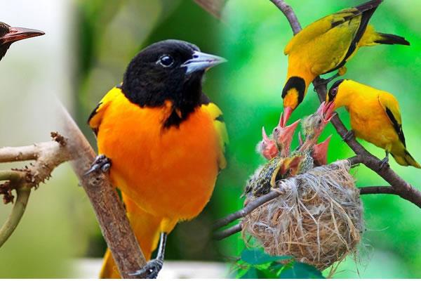 7 Day Uganda Birding